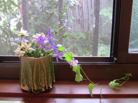 木の花一癒し系、のんちゃんの心が伝わるでしょうか。
