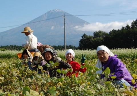 富士山の見える畑で農作業体験