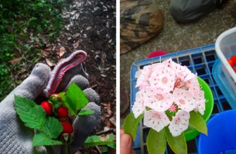 農作業中に見つけた花と実
